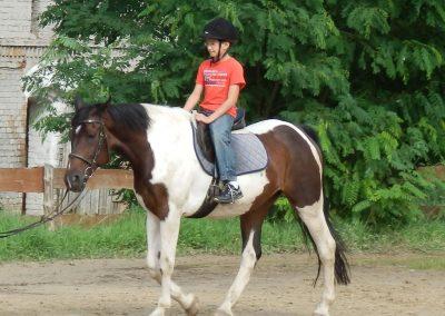 stadnina-koni-172