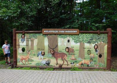 Wielkopolski Park Narodowy 50