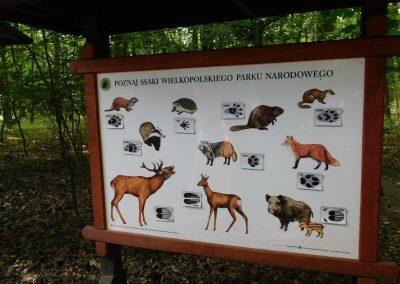 Wielkopolski Park Narodowy 55
